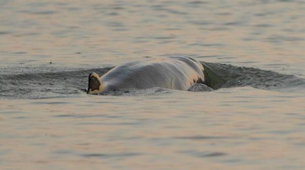 Dolphin Habitate Site