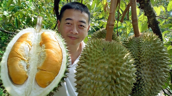 Durian Plantations